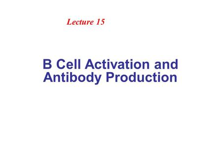 B Cell Activation and Antibody Production Lecture 15.