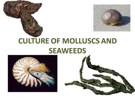 CULTURE OF MOLLUSCS AND SEAWEEDS