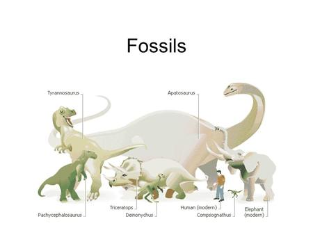 Fossils The Discovery of Dinosaurs. Facts about Fossils A type of scientist named a palaeontologist studies fossils to learn about prehistoric plants.
