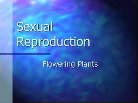 Sexual Reproduction Flowering Plants. Two Types of Seed Producing Plants 1. Angiosperms 1. Angiosperms Flowering plants Flowering plants 2. Gymnosperm.