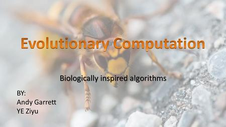 Biologically inspired algorithms BY: Andy Garrett YE Ziyu.
