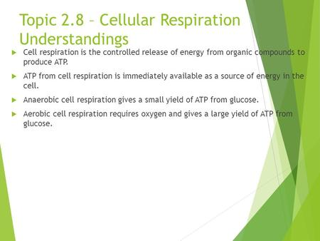 Topic 2.8 – Cellular Respiration Understandings  Cell respiration is the controlled release of energy from organic compounds to produce ATP.  ATP from.