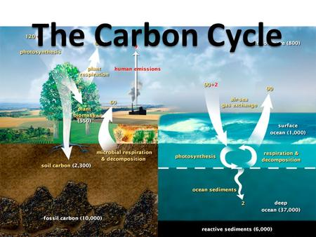 The Carbon Cycle. Science 10 Data Booklet Shows Three Parts to the cycle 1)Cycling Carbon: The carbon that is moving through the ecosystem.