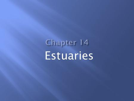 Estuaries.  An estuary is a semi-enclosed body of water that has a free connection with the sea.