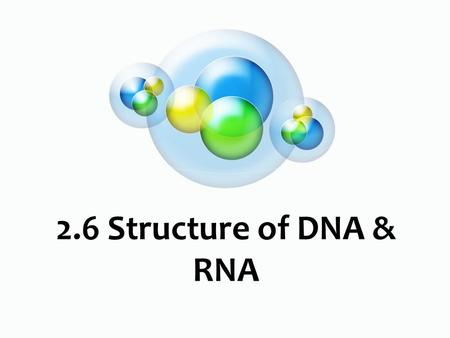 2.6 Structure of DNA & RNA. Nucleic Acids What do we know already?