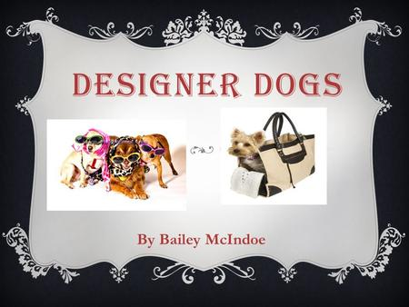 DESIGNER DOGS By Bailey McIndoe. WHAT IS A DESIGNER DOG?  Hybrid dogs: Controlled cross-breeding between two purebreds for desirable traits.  The Name.