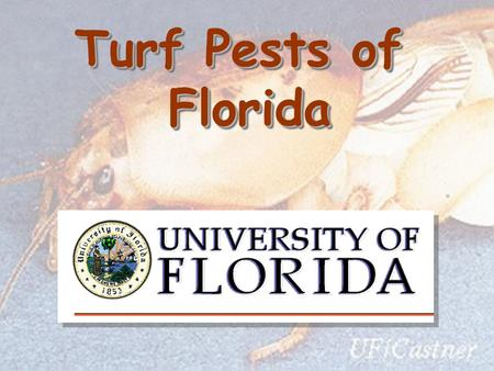 Turf Pests of Florida Florida. Life Cycle of Chinch Bug Incomplete (gradual) metamorphosis Incomplete (gradual) metamorphosis Egg 6 Nymphal Stages Adult.