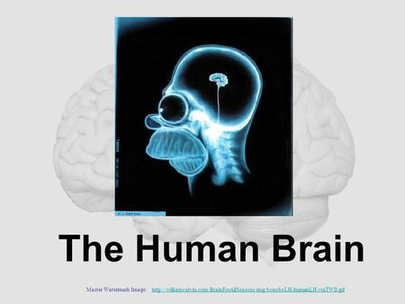 The Human Brain Master Watermark Image: