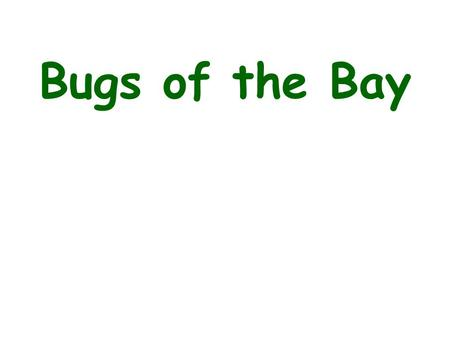 Bugs of the Bay.