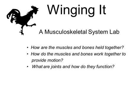 Winging It A Musculoskeletal System Lab How are the muscles and bones held together? How do the muscles and bones work together to provide motion? What.