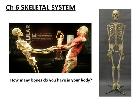 Ch 6 SKELETAL SYSTEM How many bones do you have in your body?