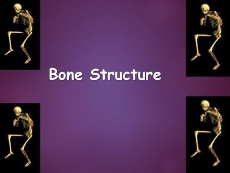 Bone Structure. Bone Structure in General  Bone is a type of connective tissue  It is as strong as steel but as light as aluminum  It is a moist living.
