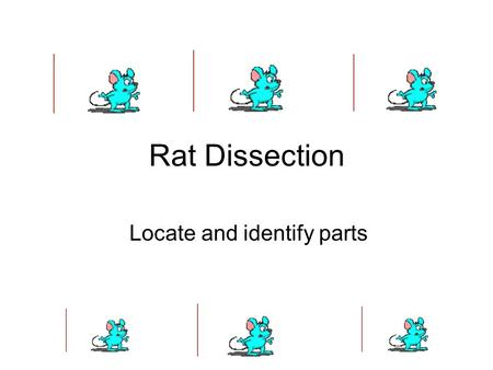 Rat Dissection Locate and identify parts. Oral cavity With a pair of heavy scissors or bone cutters, cut the muscles, skin and mandible at the angle of.