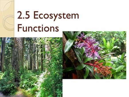 2.5 Ecosystem Functions. Major Functions of An Ecosystem Producers-Convert sunlight energy into organic matter Consumers- Use living organic matter as.