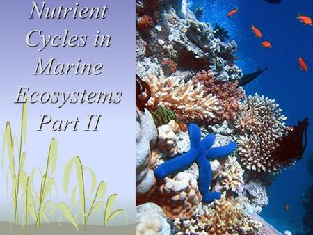 Nutrient Cycles in Marine Ecosystems Part II