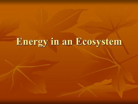Energy in an Ecosystem. Get out your HW and grab your ecosystems…