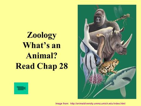 Zoology What's an Animal? Read Chap 28 Image from: