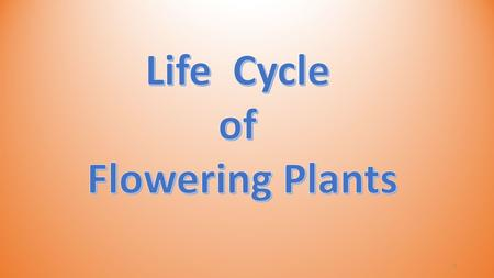 1. Most flowering plants grow from seeds! 2 Stage 1: Seed Stage 2: Growth Stage 3: Flowering Plant Stage 4: Fruiting Plant 3.
