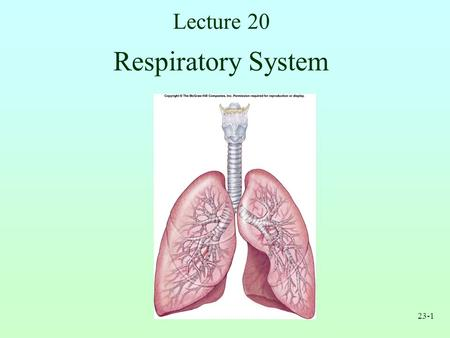 Lecture 20 Respiratory System.