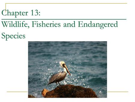 Chapter 13: Wildlife, Fisheries and Endangered Species