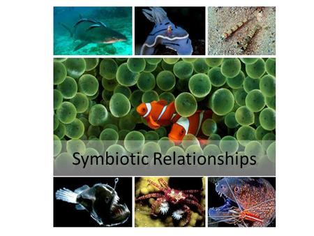 Symbiotic Relationships. The three types of symbiosis, plus 1.