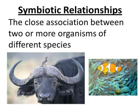 Symbiotic Relationships The close association between two or more organisms of different species.