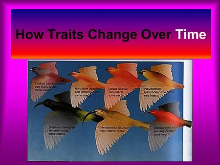 How Traits Change Over Time. How man has changed the traits of organisms through Selective Breeding. Dogs have been breed to be friendly Cows to produce.