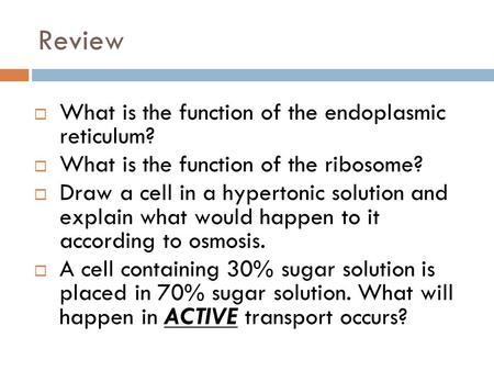 Review  What is the function of the endoplasmic reticulum?  What is the function of the ribosome?  Draw a cell in a hypertonic solution and explain.