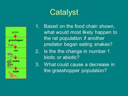 Catalyst Based on the food chain shown, what would most likely happen to the rat population if another predator began eating snakes? Is the the change.