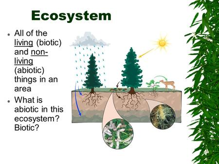 Ecosystem All of the living (biotic) and non- living (abiotic) things in an area What is abiotic in this ecosystem? Biotic?