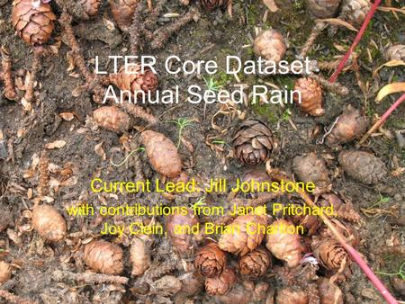 LTER Core Dataset Annual Seed Rain Current Lead: Jill Johnstone with contributions from Janet Pritchard, Joy Clein, and Brian Charlton.
