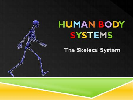 HUMAN BODYSYSTEMSHUMAN BODYSYSTEMS The Skeletal System.