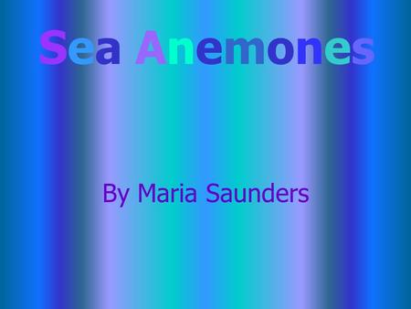By Maria Saunders Sea AnemonesSea Anemones Sea Anemone Sea anemones are also called powder puffs, white plumes, and dahlias. They can be red, green,