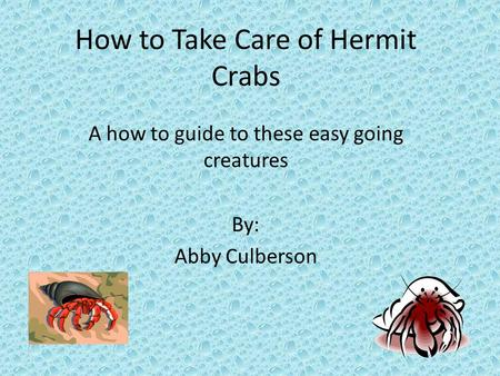 How to Take Care of Hermit Crabs A how to guide to these easy going creatures By: Abby Culberson.