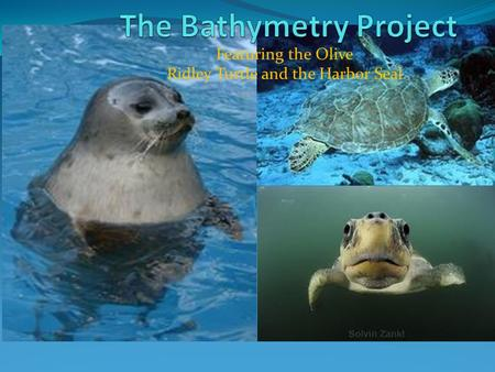 Featuring the Olive Ridley Turtle and the Harbor Seal.