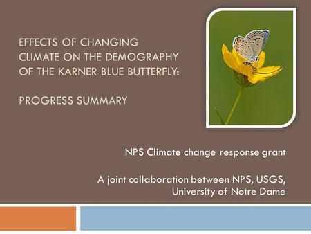 EFFECTS OF CHANGING CLIMATE ON THE DEMOGRAPHY OF THE KARNER BLUE BUTTERFLY: PROGRESS SUMMARY NPS Climate change response grant A joint collaboration between.