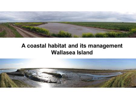 A coastal habitat and its management Wallasea Island.