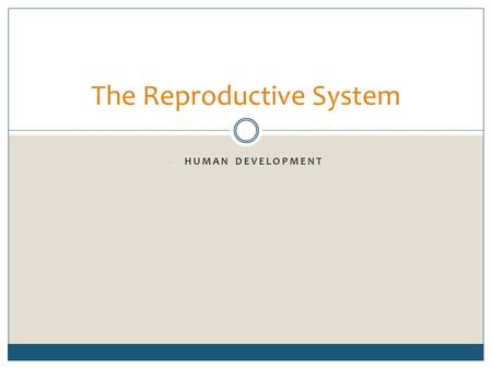 - HUMAN DEVELOPMENT The Reproductive System. Stages of Human Development Sexual reproduction occurs when an ovum becomes fertilized by a spermatozoan.