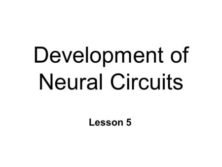 Development of Neural Circuits Lesson 5. Stages of Cellular Activity n 6 distinct stages 1. Neurogenesis 2. Cell migration 3. Differentiation 4. Synaptogenesis.