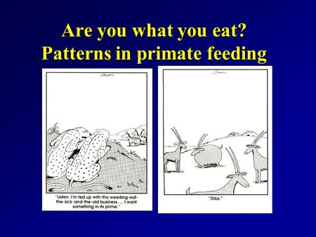 Are you what you eat? Patterns in primate feeding