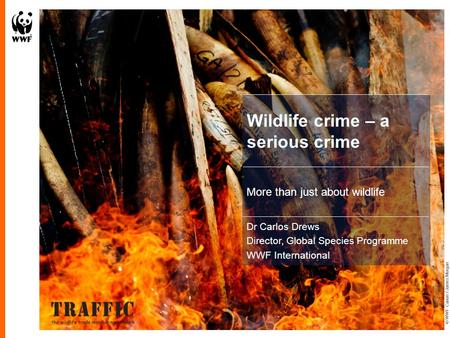 Wildlife crime – a serious crime More than just about wildlife Dr Carlos Drews Director, Global Species Programme WWF International © WWF-Canon / James.