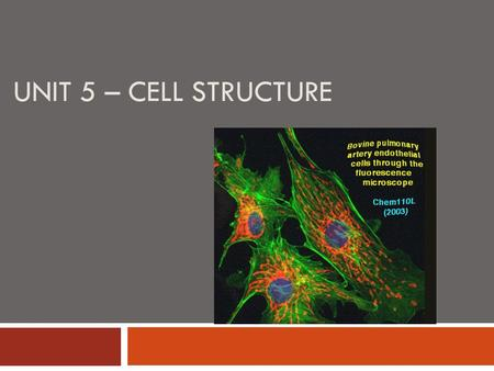 UNIT 5 – CELL STRUCTURE Intro videos and animations     Inner workings.