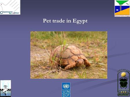 Pet trade in Egypt.