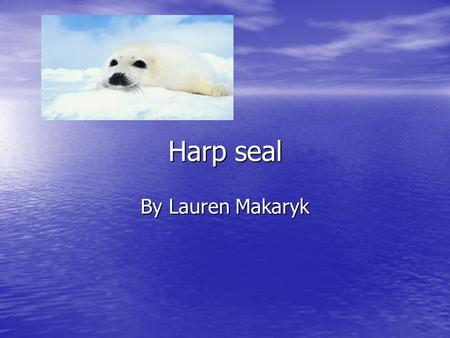 Harp seal By Lauren Makaryk. Introduction Rt! Rt! Rt! What animal is white cute and lives in the North Atlantic and Arctic oceans? Well it is a Harp seal.