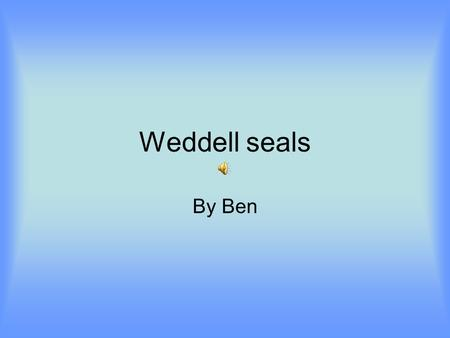 Weddell seals By Ben. Quick facts Population:800,000 individuals Location: Antarctic circumpolar. Size :Up to 10 ft long. Weight :up to 1000 pounds. Diet:
