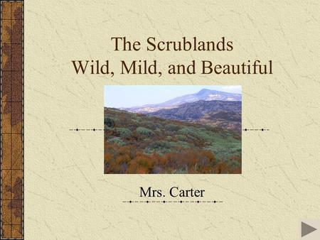 The Scrublands Wild, Mild, and Beautiful Mrs. Carter.
