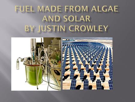 The Algae is made in giant stainless steal containers. The researchers feed the algae sugar, then the algae gives of oil that can be harvested and then.