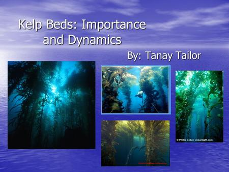 Kelp Beds: Importance and Dynamics By: Tanay Tailor.