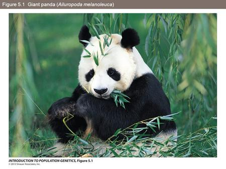Figure 5.1 Giant panda (Ailuropoda melanoleuca). Figure 5.2 A coalescence tree with six leaf nodes representing six DNA sequences.