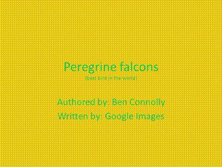 Peregrine falcons (best bird in the world) Authored by: Ben Connolly Written by: Google Images.